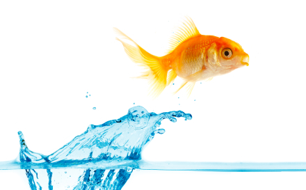 gold small fish jumps out of water